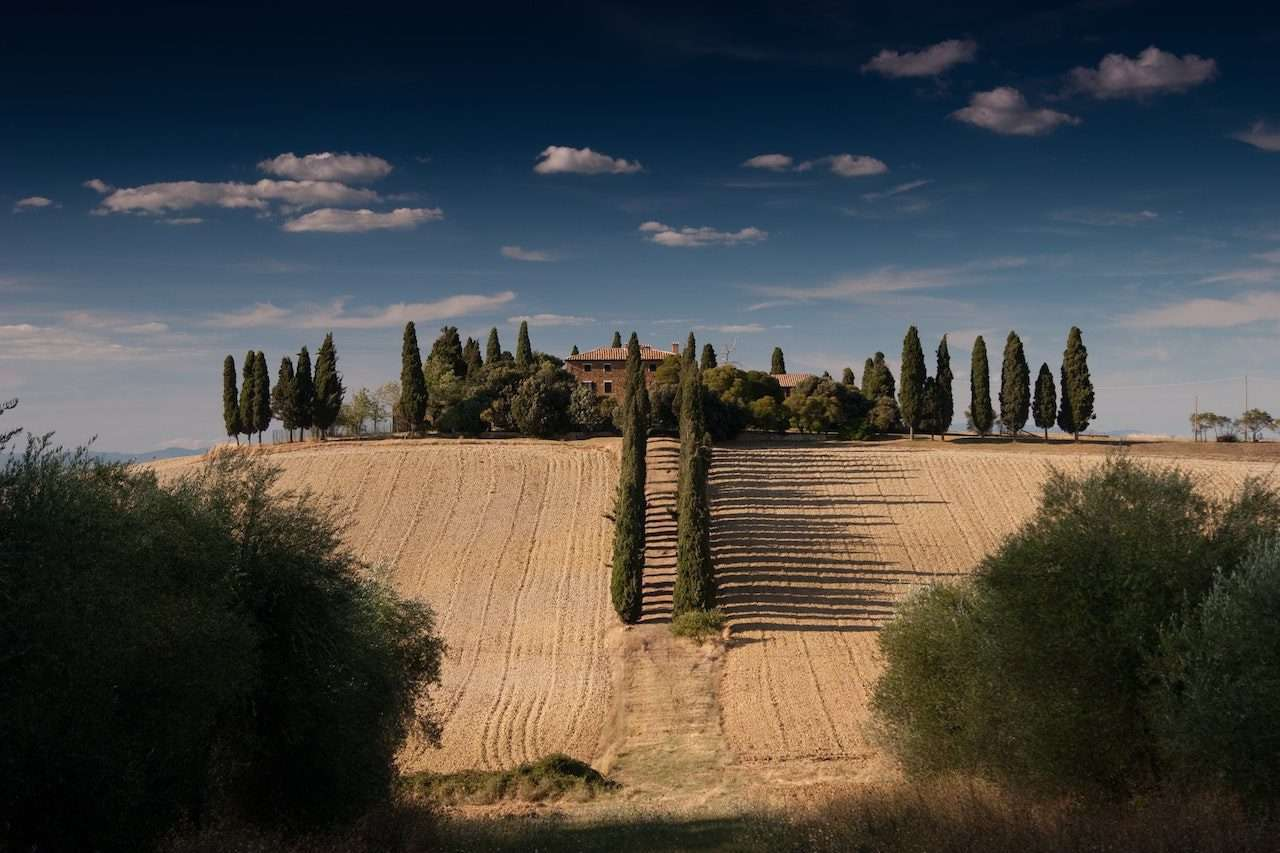 Tuscan cypresses during a wedding in Italy