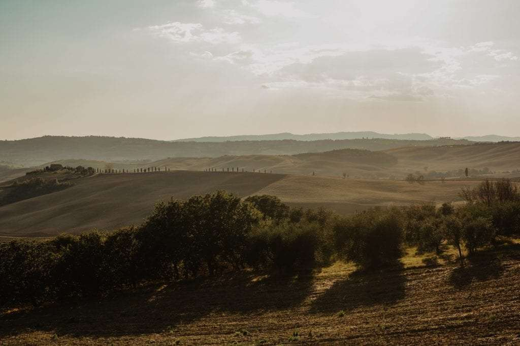 Tuscan fields during sunset.