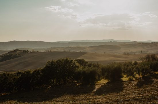 fields in Tuscany during sunset.