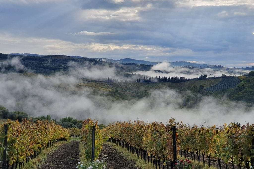 Siena's vineyards with the fog