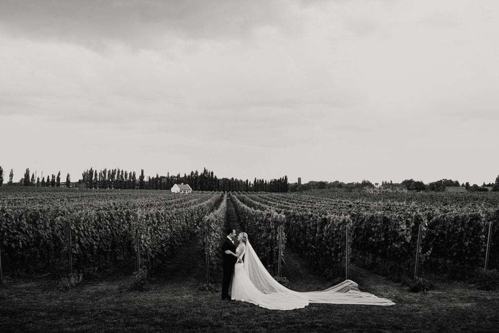 a couple embraces in a tuscan vineyard