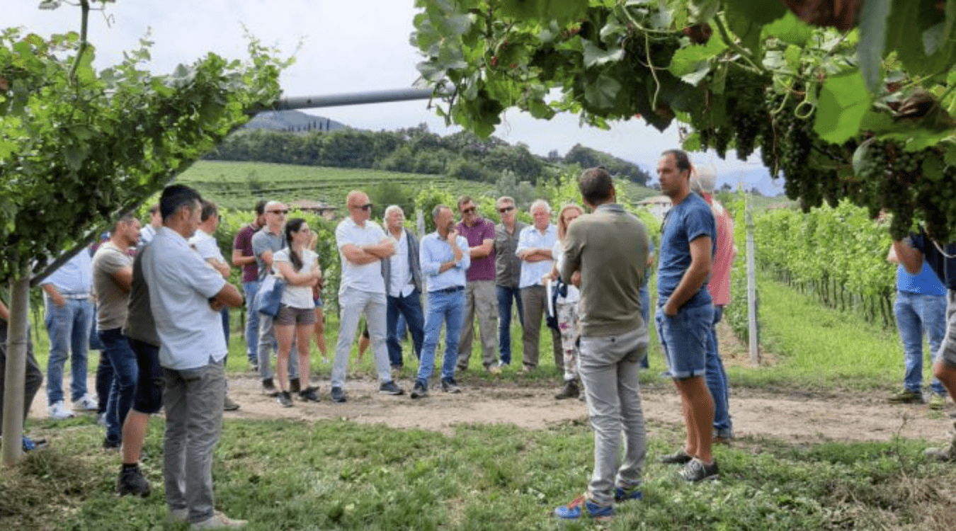 A lesson with an agronomist during a wine experience after a wedding in Tuscany.